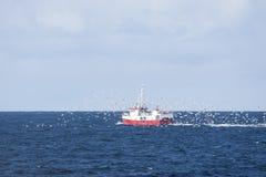 Κοπάδι seagulls που χαράζουν ένα αλιευτικό πλοιάριο που αλιεύει για το βακαλάο σε Andenes Στοκ Εικόνες