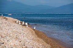 Κοπάδι seagulls σε μια ακροθαλασσιά Στοκ Φωτογραφία