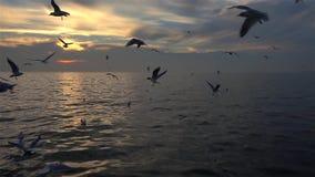 Κοπάδι Seagulls των πουλιών που πετούν στο μπλε ουρανό σε αργή κίνηση απόθεμα βίντεο