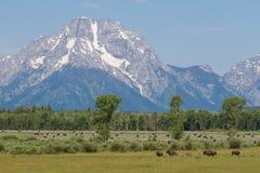 Κοπάδι βισώνων μπλε ουρανού βουνών στοκ φωτογραφία με δικαίωμα ελεύθερης χρήσης