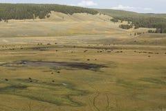 Κοπάδι βισώνων που περιπλανάται την κοιλάδα του Hayden στο εθνικό πάρκο Yellowstone, W Στοκ Εικόνα