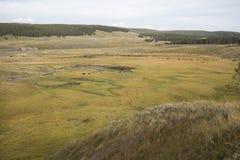 Κοπάδι βισώνων που περιπλανάται την κοιλάδα του Hayden στο εθνικό πάρκο Yellowstone, W Στοκ φωτογραφία με δικαίωμα ελεύθερης χρήσης