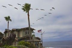 Κοπάδι πουλιών επάνω από ένα σπίτι και τους φοίνικες Στοκ εικόνα με δικαίωμα ελεύθερης χρήσης