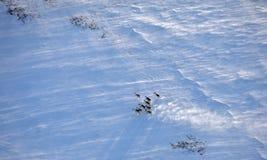 Κοπάδι ταράνδων χειμερινό tundra στοκ φωτογραφίες