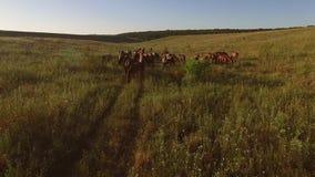 Κοπάδι των αλόγων στο λιβάδι απόθεμα βίντεο