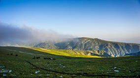 Κοπάδι των αλόγων υψηλών στα βουνά, βουνό Rila, Βουλγαρία Στοκ Εικόνες