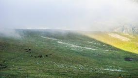 Κοπάδι των αλόγων υψηλών στα βουνά, βουνό Rila, Βουλγαρία Στοκ Φωτογραφίες