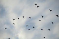 Κοπάδι των περιστεριών στον ουρανό Στοκ φωτογραφία με δικαίωμα ελεύθερης χρήσης