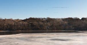 Κοπάδι των πουλιών πέρα από το εν μέρει παγωμένο ποτάμι Μισισιπή Στοκ Εικόνες