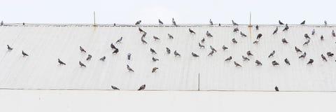 Κοπάδι των πουλιών σε μια στέγη Στοκ φωτογραφία με δικαίωμα ελεύθερης χρήσης