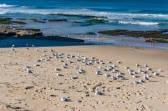 Κοπάδι των πουλιών στην παραλία Στοκ εικόνες με δικαίωμα ελεύθερης χρήσης