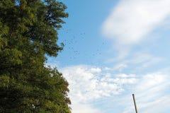 Κοπάδι των πουλιών στον ουρανό Στοκ Φωτογραφία