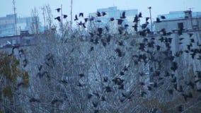 Κοπάδι των πουλιών στο δέντρο που πετά μακριά απόθεμα βίντεο