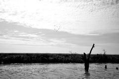 Κοπάδι των πουλιών Στοκ Εικόνες