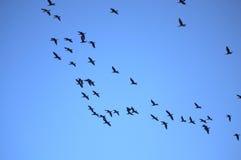 Κοπάδι των πουλιών στοκ φωτογραφία