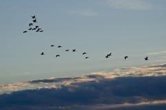 Κοπάδι των χήνων που πετούν πέρα από τον ουρανό πρωινού Στοκ φωτογραφία με δικαίωμα ελεύθερης χρήσης