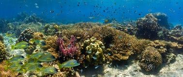 Κοπάδι των ψαριών στην κοραλλιογενή ύφαλο - πανόραμα Στοκ Εικόνα