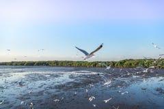 Κοπάδι seagull πουλιών του πετάγματος υψηλού επάνω στον αέρα με τα φτερά του που διαδίδονται Στοκ φωτογραφίες με δικαίωμα ελεύθερης χρήσης