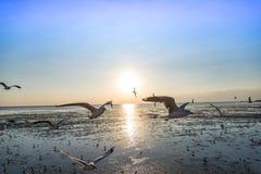 Κοπάδι seagull πουλιών του πετάγματος υψηλού επάνω στον αέρα με τα φτερά του που διαδίδονται Στοκ Εικόνες