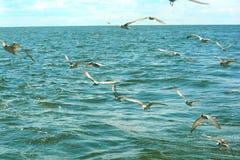 Κοπάδι Seagulls Στοκ φωτογραφία με δικαίωμα ελεύθερης χρήσης