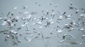 Κοπάδι Seagulls Στοκ Εικόνα