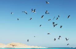 Κοπάδι Seagulls στοκ φωτογραφίες