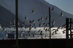 Κοπάδι Seagulls Στοκ εικόνα με δικαίωμα ελεύθερης χρήσης