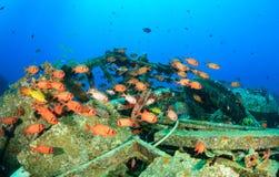 Κοπάδι Squirrelfish γύρω από τα υποβρύχια συντρίμμια Στοκ εικόνες με δικαίωμα ελεύθερης χρήσης