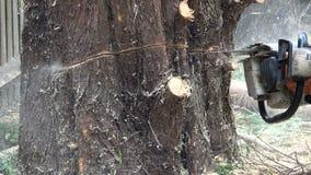 Κοπή δενδροκόμων μέσω ενός κορμού δέντρων απόθεμα βίντεο