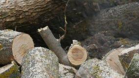 Κοπή μέσω του ξύλου με το αλυσιδοπρίονο απόθεμα βίντεο