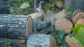 Κοπή μέσω του ξύλου με το αλυσιδοπρίονο σε αργή κίνηση απόθεμα βίντεο