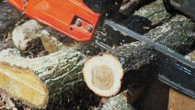 Κοπή μέσω του ξύλου με το αλυσιδοπρίονο σε σε αργή κίνηση απόθεμα βίντεο