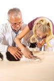 Κοπή νυχιών γατών Στοκ φωτογραφία με δικαίωμα ελεύθερης χρήσης