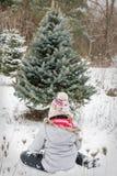 Κοπή χριστουγεννιάτικων δέντρων στοκ εικόνες με δικαίωμα ελεύθερης χρήσης