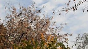 Κοράκια σε ένα δέντρο απόθεμα βίντεο