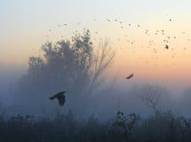 κοράκια Στοκ φωτογραφία με δικαίωμα ελεύθερης χρήσης