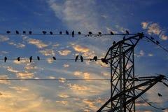 Κοράκι & x28 Corvus frugilegus& x29  σκαρφαλωμένος στα ηλεκτροφόρα καλώδια Στοκ εικόνες με δικαίωμα ελεύθερης χρήσης