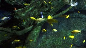Κοράλλια και εξωτικά θαλάσσια ψάρια απόθεμα βίντεο