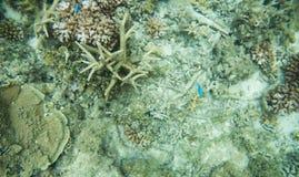 Κοράλλια και ψάρια σκοπέλων αστρολάβων Στοκ φωτογραφίες με δικαίωμα ελεύθερης χρήσης