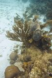 Κοράλλι και σφουγγάρι σε έναν σκόπελο Στοκ εικόνα με δικαίωμα ελεύθερης χρήσης