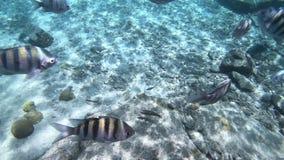 Κοράλλι και ψάρια σε Bonaire απόθεμα βίντεο