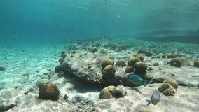Κοράλλι και ψάρια σε Bonaire φιλμ μικρού μήκους