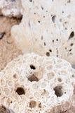 κοράλλι κινηματογραφήσ&epsil Στοκ Φωτογραφίες