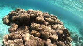 Κοράλλι σε Bonaire απόθεμα βίντεο