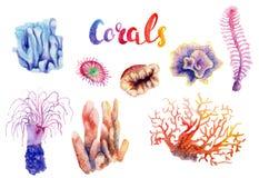 Κοράλλι σχεδίων Watercolor της Ερυθράς Θάλασσας διανυσματική απεικόνιση
