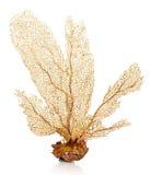 κοράλλι στοκ φωτογραφία με δικαίωμα ελεύθερης χρήσης