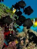 Κοράλλι Anemone με το anemone Στοκ Φωτογραφίες