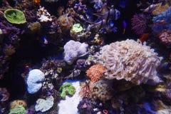 Κοράλλι, anemone ‹â€ ‹και ψάρια θάλασσας †Στοκ φωτογραφία με δικαίωμα ελεύθερης χρήσης