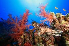κοράλλι lionfish στοκ εικόνες με δικαίωμα ελεύθερης χρήσης