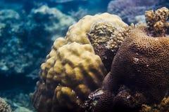 Κοράλλια & θαλάσσια ζωή Στοκ Φωτογραφίες
